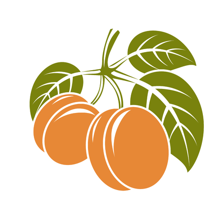fruitful: Harvesting symbol, vector fruits isolated. Ripe organic sweet apricots with green leaves, healthy food idea design icon.