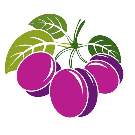 fruitful: Three purple simple vector plums with green leaves, ripe sweet fruits illustration. Healthy and organic food, harvest season symbol. Illustration