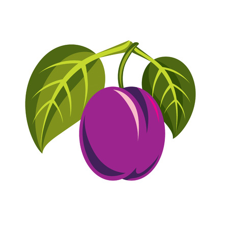fruitful: Purple simple vector plum with green leaves, ripe sweet fruits illustration. Healthy and organic food, harvest season symbol. Illustration