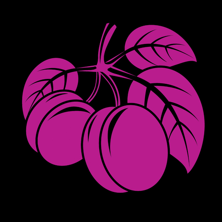 fruitful: Two purple simple vector plums with leaves, ripe sweet fruits illustration. Healthy and organic food, harvest season symbol.