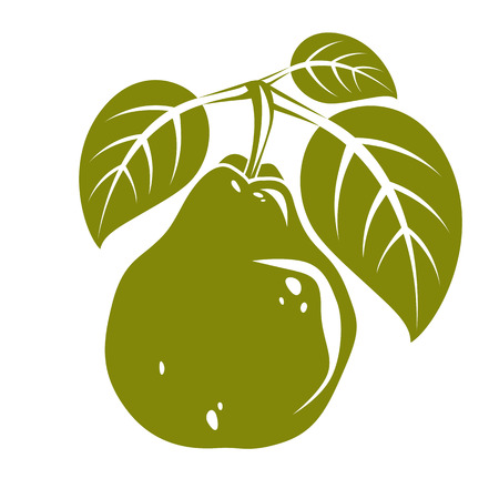 Harvesting symbol, vector fruit isolated. Single organic sweet pear with green leaves, healthy food idea design icon. Illustration