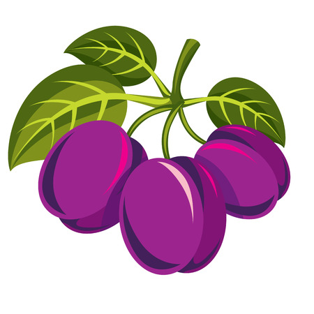 Three purple simple vector plums with green leaves, ripe sweet fruits illustration. Healthy and organic food, harvest season symbol. Illustration
