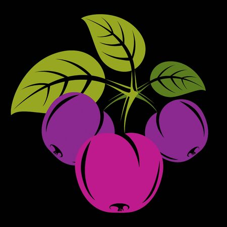 fruitful: Purple simple vector plums with green leaves, ripe sweet fruits illustration. Healthy and organic food, harvest season symbol. Illustration