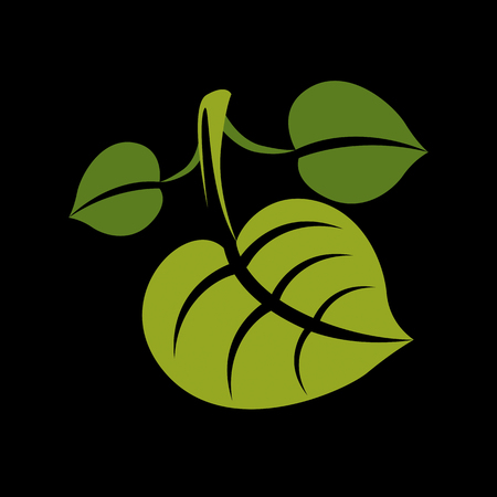be green: Three simple green vector leaves of deciduous tree, stylized nature element. Ecology symbol, can be used in graphic design.