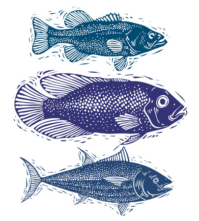 sea bream: Set of vector fishes, different underwater species. Organic seafood graphic symbols collection, freshwater fishes, sea bass, sea bream and salmon.