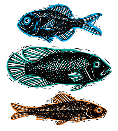 freshwater: Set of vector drawn fishes, different underwater species. Organic seafood graphic symbols collection, freshwater fishes, sea bass, sea bream and salmon.