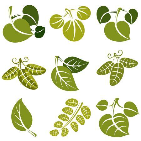 tendrils: Set of vector green spring leaves with tendrils. Ecology theme design elements, gardening symbol. Natural icons set. Illustration