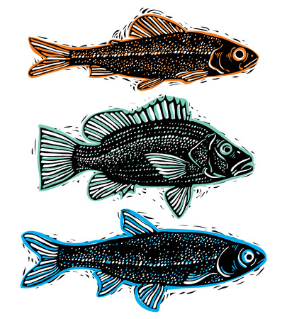 Set of vector drawn fishes, different underwater species. Organic seafood graphic symbols collection, freshwater fishes, sea bass, sea bream and salmon.