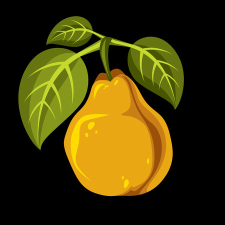 Harvesting symbol, vector fruit isolated. Single organic sweet pear orange with green leaves, healthy food idea design icon.