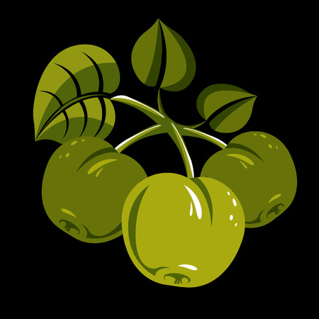 Three green simple vector apples with leaves, ripe sweet fruit illustration. Healthy and organic food, harvest season symbol. Illustration