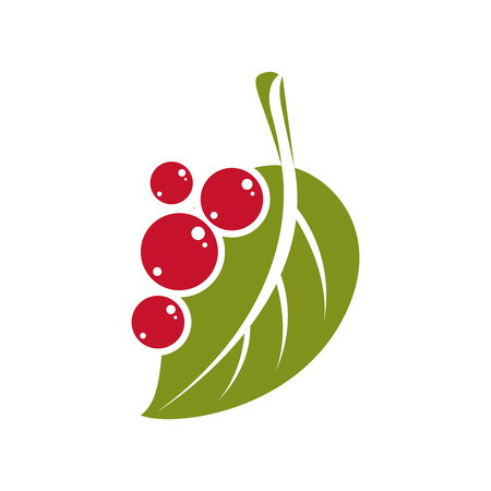 Single vector flat green leaf with berries or seeds. Herbal and botany symbol, spring season natural icon isolated on white background.