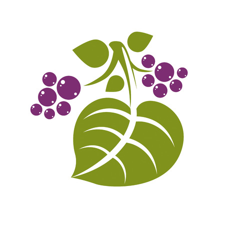 fruitful: Spring leaf simple vector icon, nature and gardening theme illustration. Stylized tree leaf with violet berries or seeds, botany and vegetarian design element. Illustration