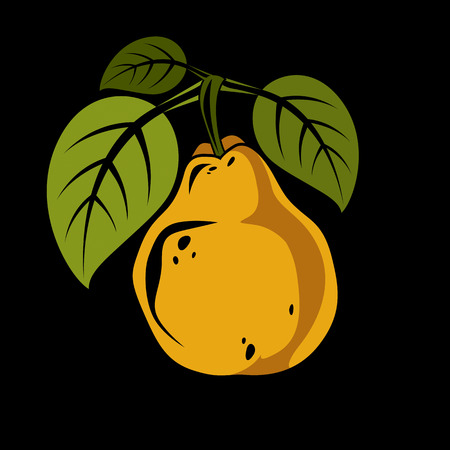 Harvesting symbol, vector fruit isolated. Single organic sweet orange pear with green leaves, healthy food idea design icon.