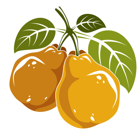Two orange simple vector pears with green leaves, ripe sweet fruits illustration. Healthy and organic food, harvest season symbol.