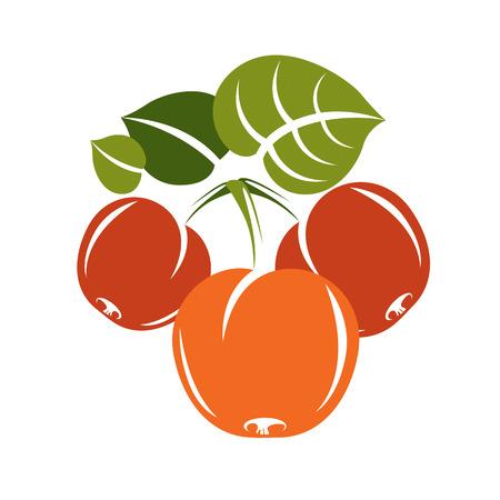 fertility emblem: Vegetarian organic food simple illustration, vector ripe sweet orange apricots isolated on white. Whole fruits. Illustration