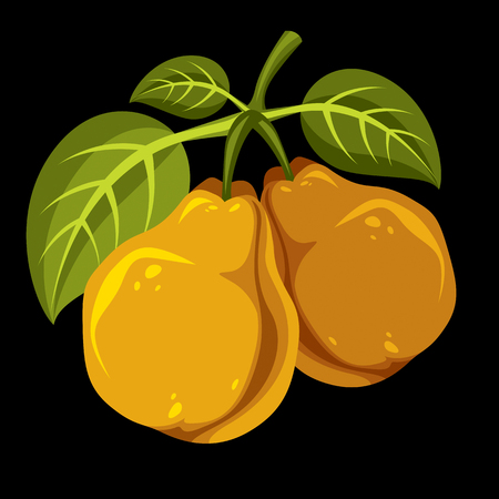 fruitful: Harvesting symbol, vector fruits isolated. Two organic sweet orange pears with green leaves, healthy food idea design icon.