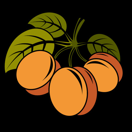 Vegetarian organic food simple illustration, three vector ripe sweet orange apricots with green leaves isolated on white. Whole fruits.