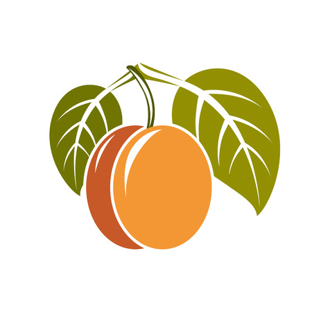 Vegetarian organic food simple illustration, vector ripe orange peach with green leaves isolated on white. Whole fruit. Illustration