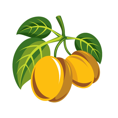 Harvesting symbol, single vector fruit isolated. Two yellow organic sour lemons with green leaves, healthy food idea design icon.