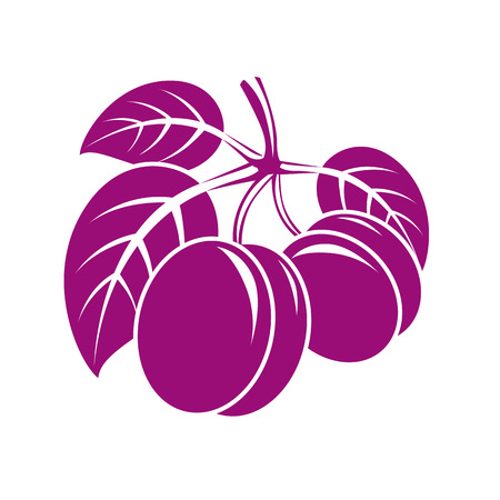 Two purple simple vector plums with leaves, ripe sweet fruits illustration. Healthy and organic food, harvest season symbol.