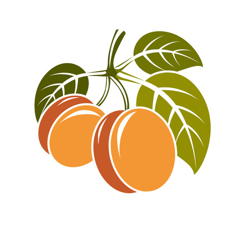Harvesting symbol, vector fruits isolated. Ripe organic sweet apricots with green leaves, healthy food idea design icon.