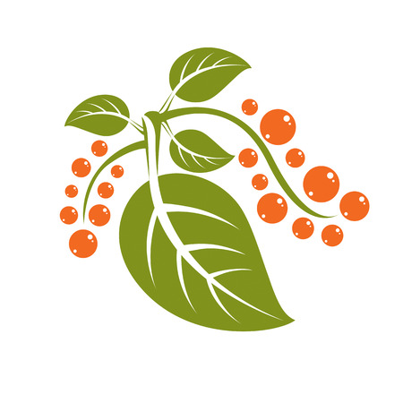 a sprig: Simple flat green vector tree leaf with orange seeds, stylized nature element. Ecology symbol, can be used in graphic design.