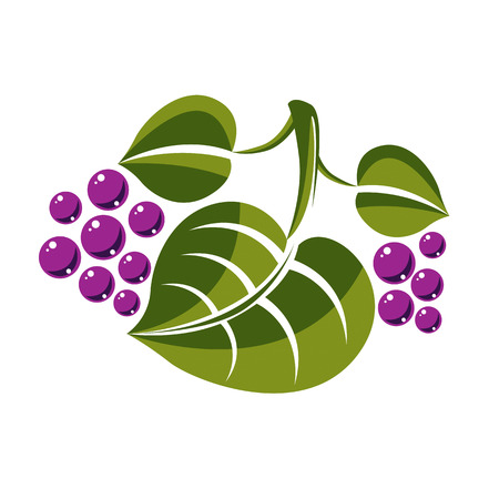 Single vector flat green leaf with violet seeds or berries. Herbal and botany symbol isolated on white background, spring season natural icon. Illustration
