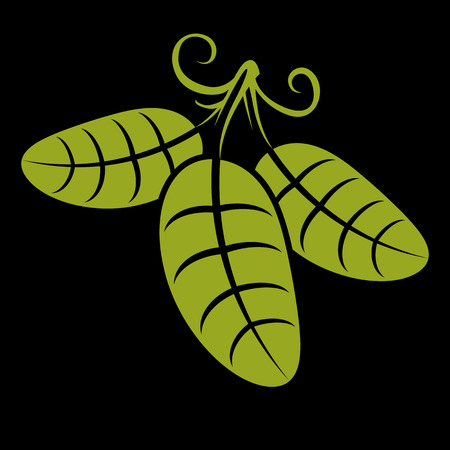 tendrils: Three spring or summer leaves simple vector icon, nature and gardening theme illustration. Stylized tree green leaf with tendrils, botany and vegetarian design element.