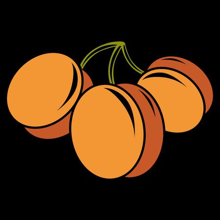 apricot tree: Vegetarian organic food simple illustration, three vector ripe sweet orange apricots isolated. Whole fruits.