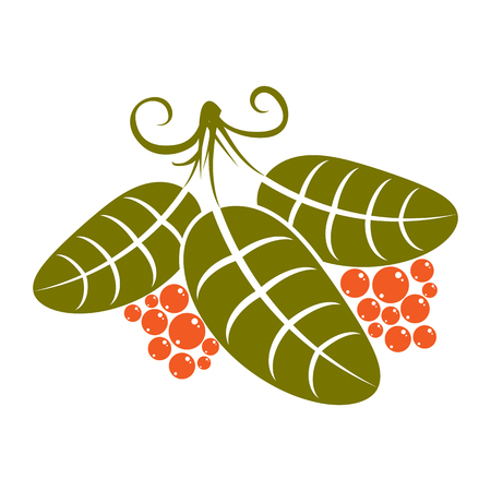 Three simple green vector leaves with tendrils and orange seeds, stylized nature herbal element. Ecology symbol, can be used in graphic design. Deciduous tree leaf.
