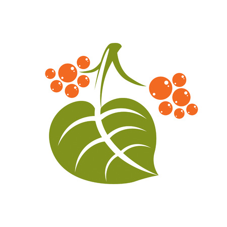 Simple flat green deciduous vector tree leaf with orange seeds, stylized nature element. Ecology symbol, can be used in graphic design.