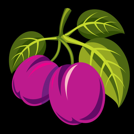 Purple simple vector plums with green leaves, ripe sweet fruits illustration. Healthy and organic food, harvest season symbol. Illustration