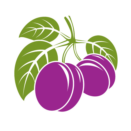 Two purple simple vector plums with green leaves, ripe sweet fruits illustration. Healthy and organic food, harvest season symbol. Illustration