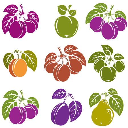 Collection of simple fruits vector icons with green leaves, harvest season symbols. Apricots, plums, pears, apples and cherries isolated design elements.