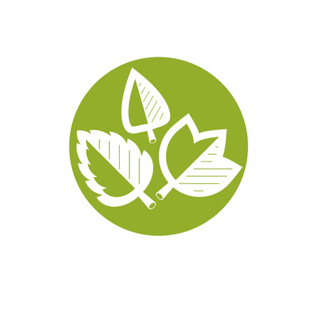 Vector spring leaves vector illustration. Alternative medicine concept, phytotherapy logo. Imagens - 84039457