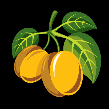 Harvesting symbol, vector fruits isolated. Two yellow organic sour lemons with green leaves, healthy food idea design icon.