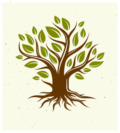 Beautiful tree vector classic style drawing logo or icon, perfect silhouette.