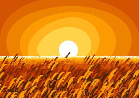 Champ de blé dans une lumière du soir du soleil couchant illustration vectorielle de paysage tranquille et calme pittoresque, oubliez tous les problèmes et détendez-vous concept. Vecteurs