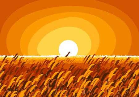 Wheat field in an evening light of setting sun scenic tranquil and calm landscape vector illustration, forget about all the problems and relax concept. 矢量图像
