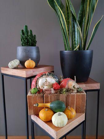 Still life of plants with pumpkins Stockfoto