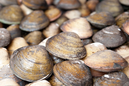 stacked: Stacked fresh raw clams. Stock Photo