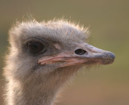 emu Imagens