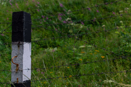 black and white striped fence post with barbed wire stand in dense grass with flowers in field