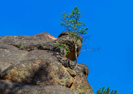 Small green tree grows on large textured stone rock covered with red orange moss. Bottom view. Natural Park Krasnoyarsk Pillars. Siberia. Blue sky, summer