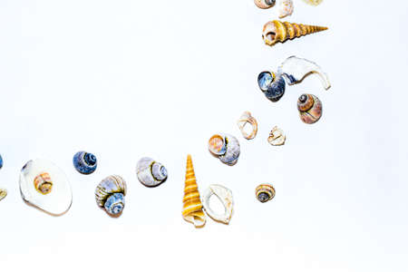 Round corner of small marine colorful light orange blue pink purple seashells of different shapes on white background. Design template
