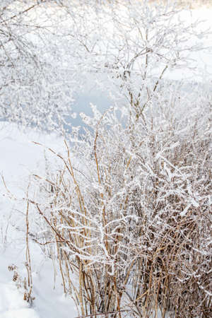 Bush in white fluffy snow, light blue river flows background. Winter bright sunny day. Shore with snowdrifts Banque d'images - 167033820