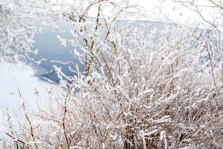 Bushes in white fluffy snow, blue river flows background. Winter bright sunny day. Shore 스톡 콘텐츠