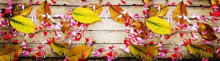 Autumnal composition of colorful flowers and yellow leaves Banque d'images