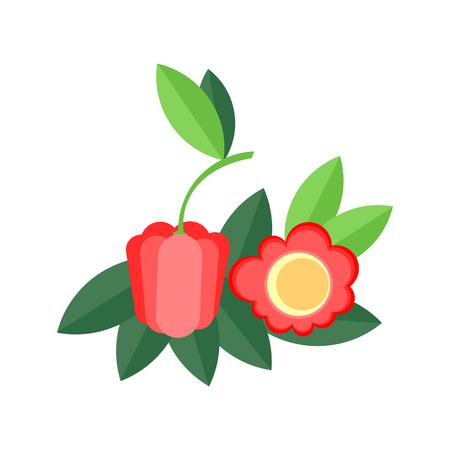 Acerola vector flat. Azerola Barbados cherry or sweet cherry.