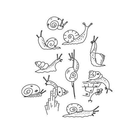 Information flyer sketch, snail inquisitiveness. Funny little gastropod creatures, mucous body with long antennae, spiral carapace house, crawling along plant, object, tending upward. Cartoon flat.